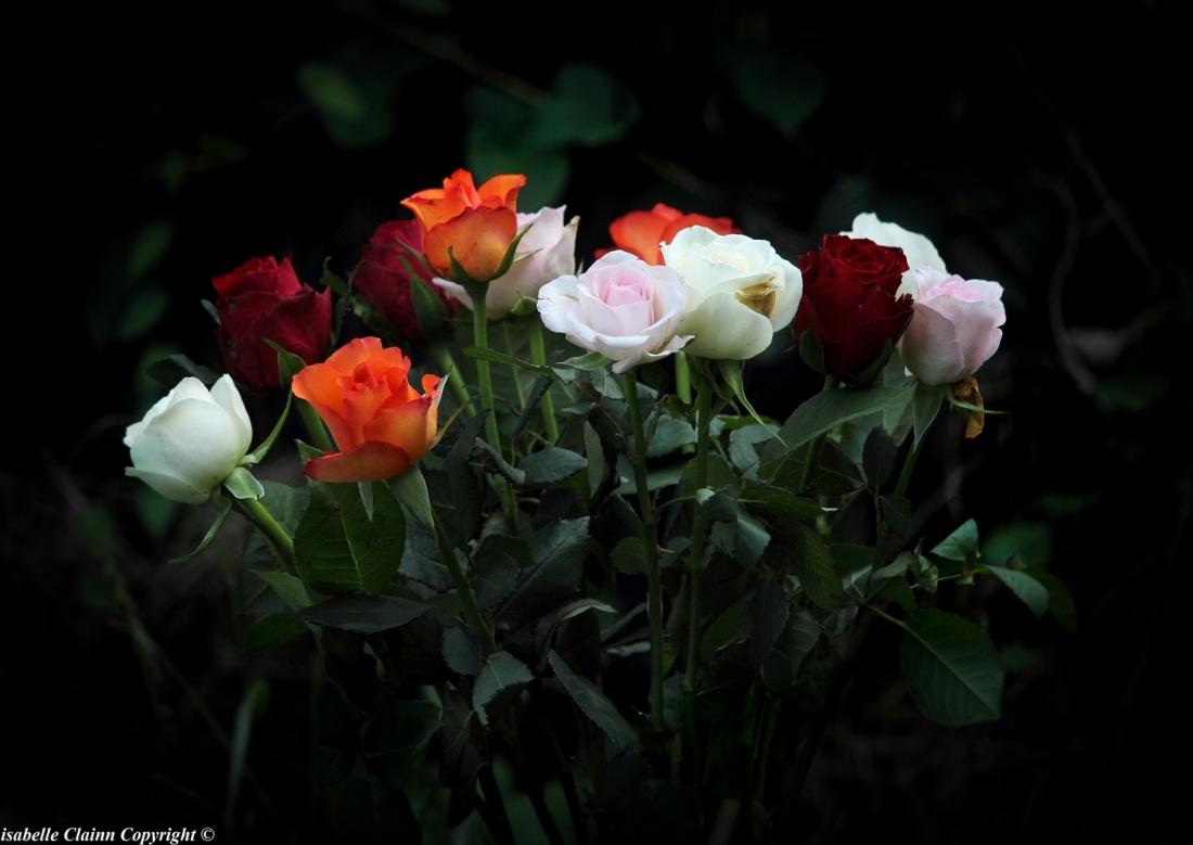 bouquet de roses f2p.JPG