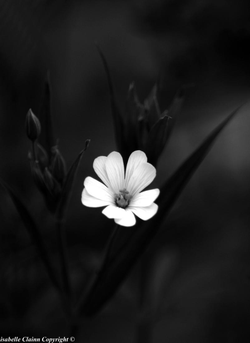 Fleur A 1 f2p.jpg