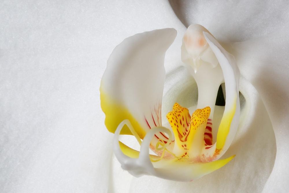 5965b0ec9abf9_coeur-orchide.thumb.jpg.6dada2bf8bee430f0f1233ee34aaaf25.jpg