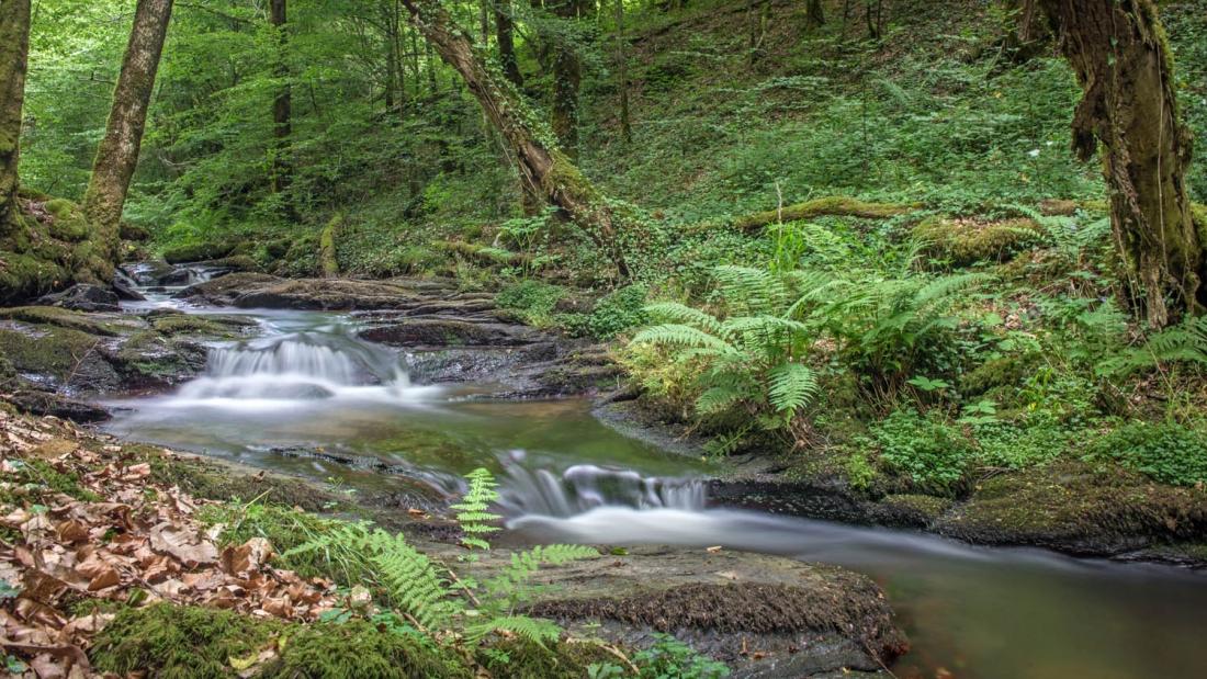 ruisseau de montrou (4).jpg