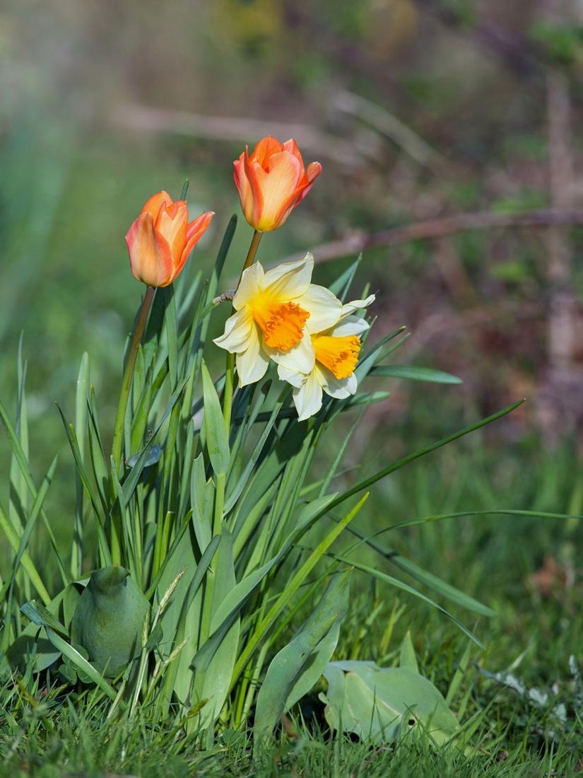 fleurs (3).jpg