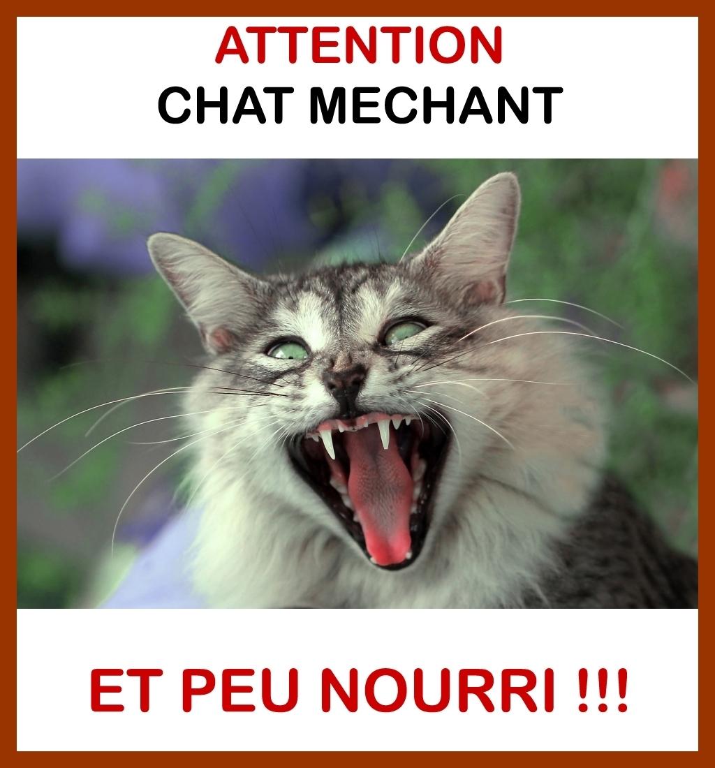 AttentuonChatMéchant.jpg