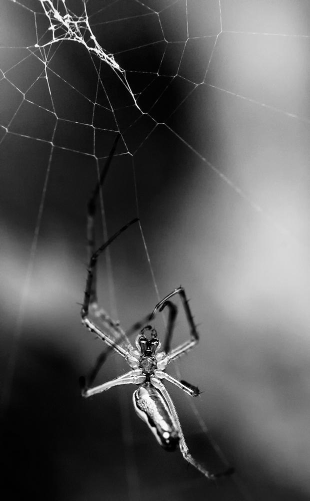 arachno.thumb.jpg.2eed2f8eb7ca1d5c3a9ebc14d6d71228.jpg