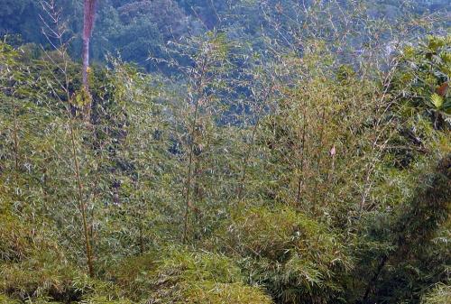 Bambous1 (2).jpg