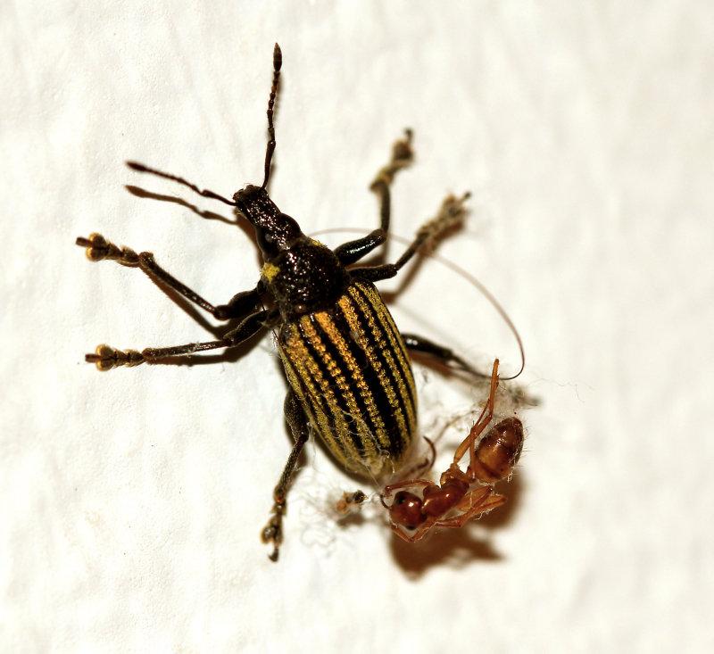 Insecte2bis.jpg