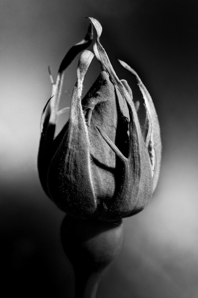 floralys.thumb.jpg.a2efc7ce3e9db9691610e96d87a87594.jpg