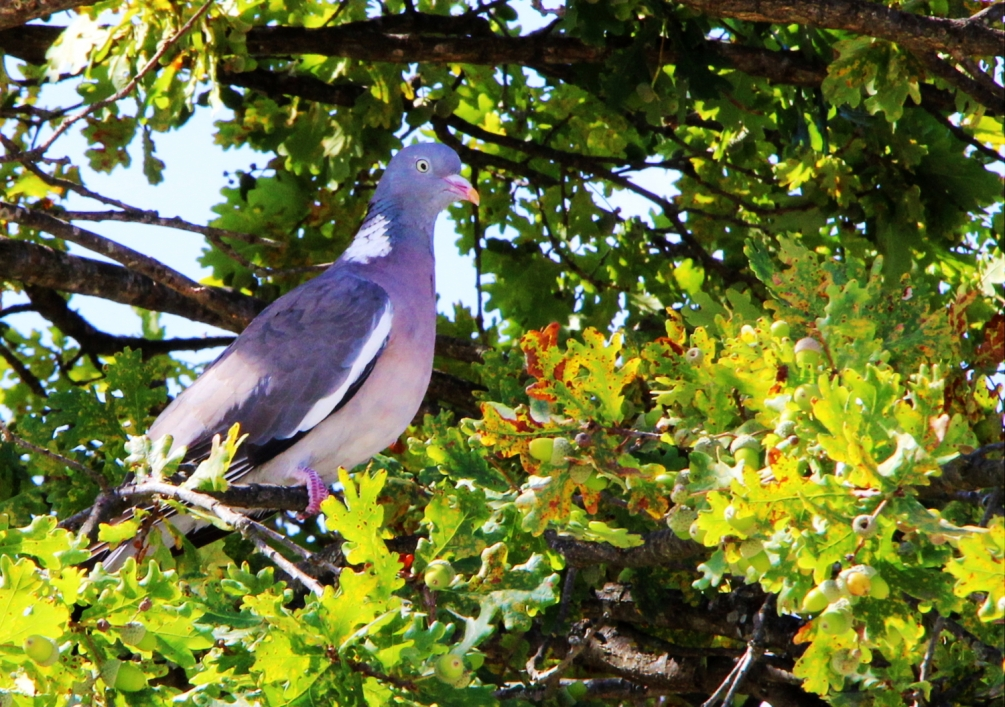 pigeon_hdr_1.JPG