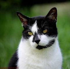 Guizmo, chat de gouttière