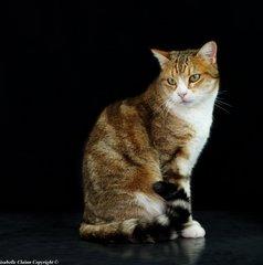 Darwin, chat de gouttière
