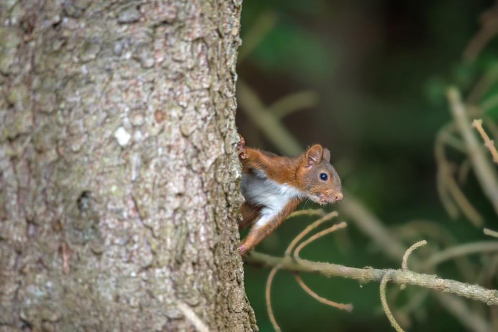l'écureuil.jpg