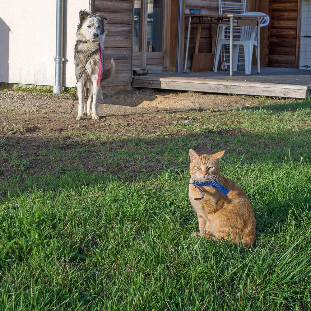 entre chien et chat.jpg