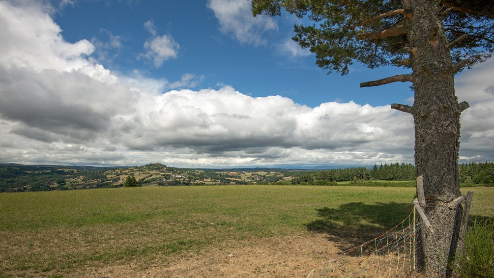 panorama roc de Peyre & l'arbre.jpg