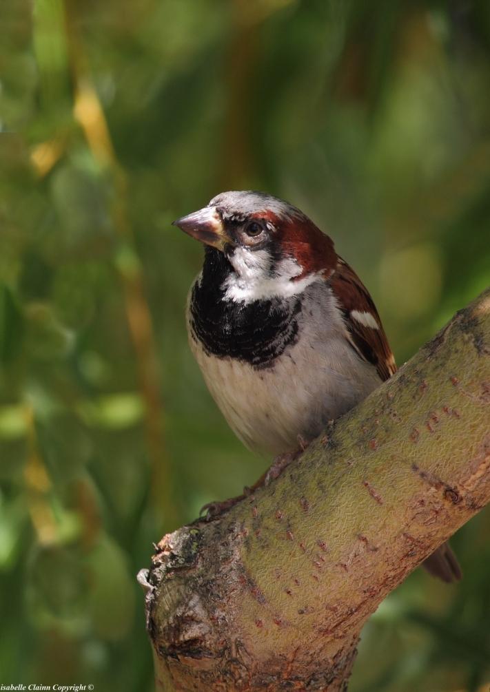 le petit oiseau f2p.JPG