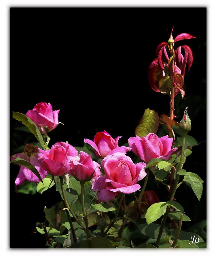 Bouquet de rose.jpg