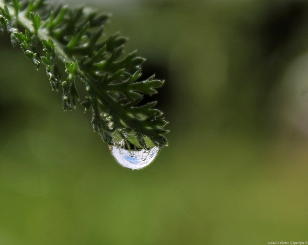 Ciel bleu dans la goutte d'eau forumdephotos.JPG
