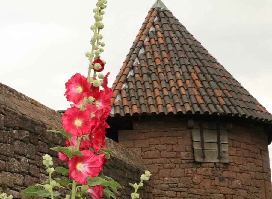 fleur chateau.jpg