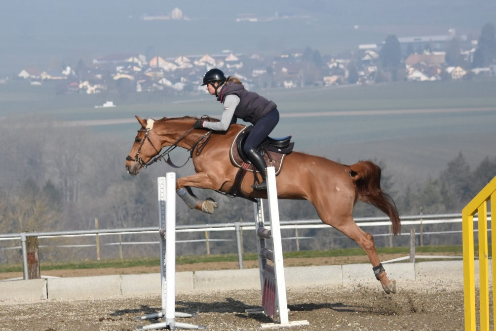 chevaux3.jpg
