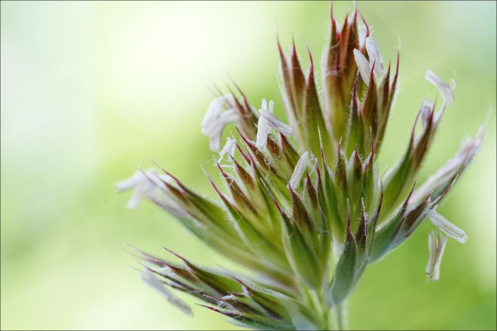 fleur_herbe.thumb.jpg.e257e05744a495bf84652fd7fb522493.jpg
