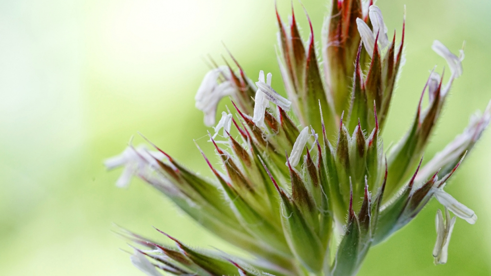 fleur_herbe02.jpg
