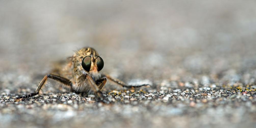 moustique(5).jpg