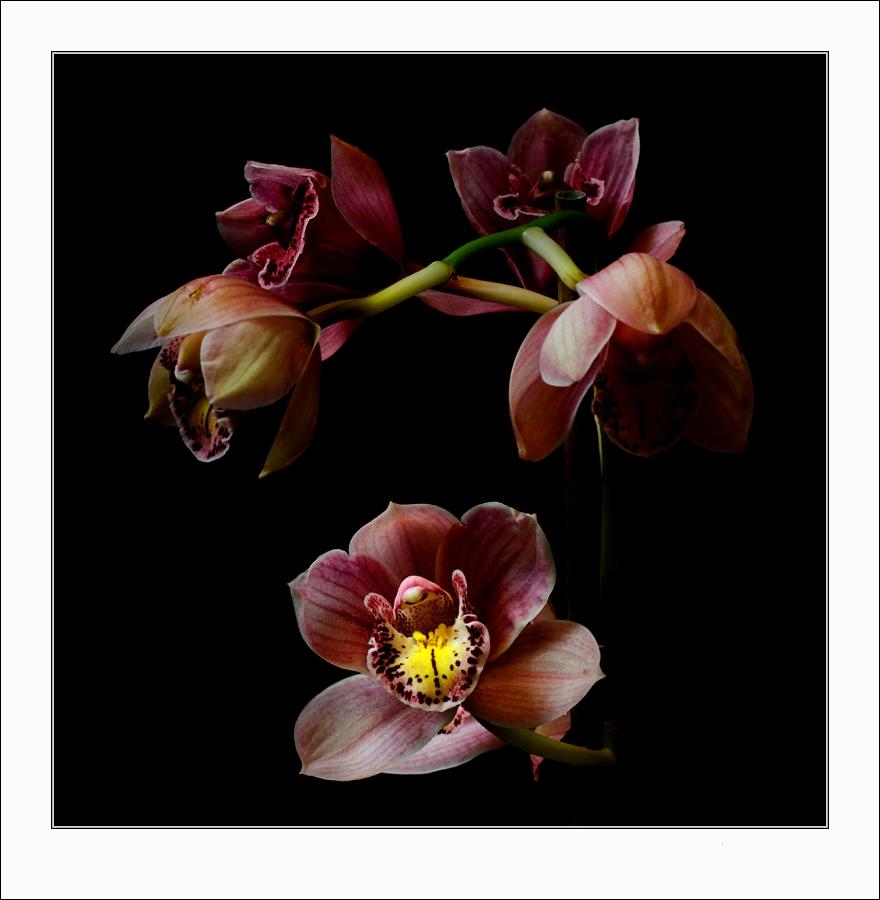 orchidee_koinberg.thumb.jpg.eeb096be728f579941842b9743e65da7.jpg