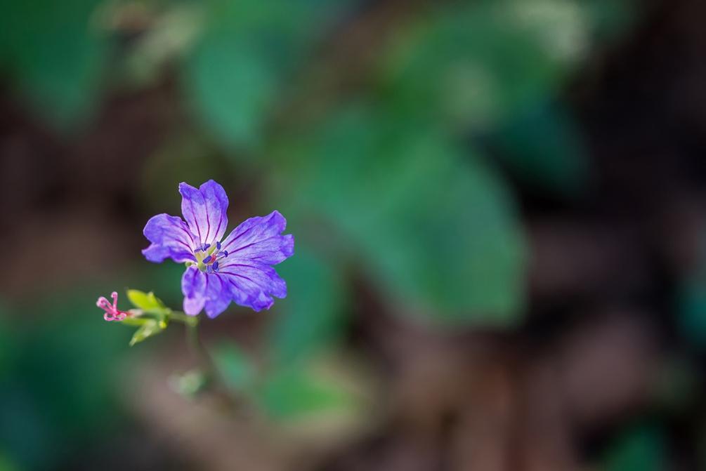 fleur mauve.jpg