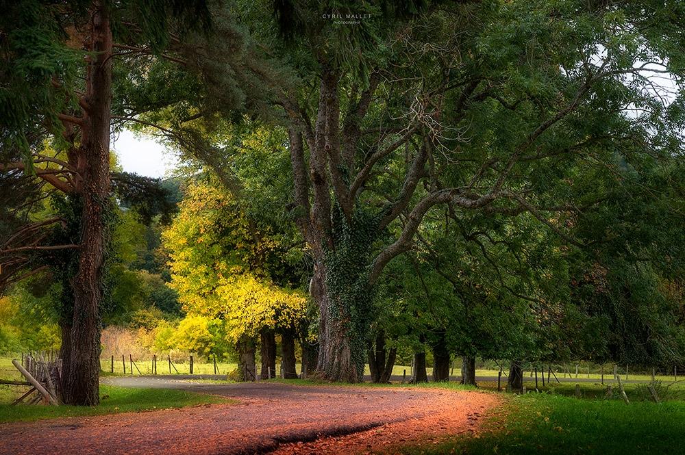 Un arbre au bord d'une route.site.jpg