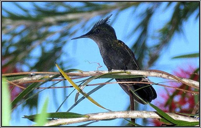gwada-faune-20.jpg