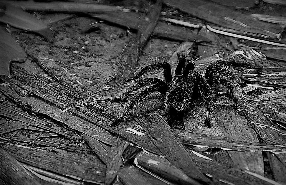 araignée 2.jpg
