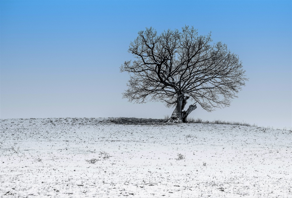silhouette hivernale 2.JPG