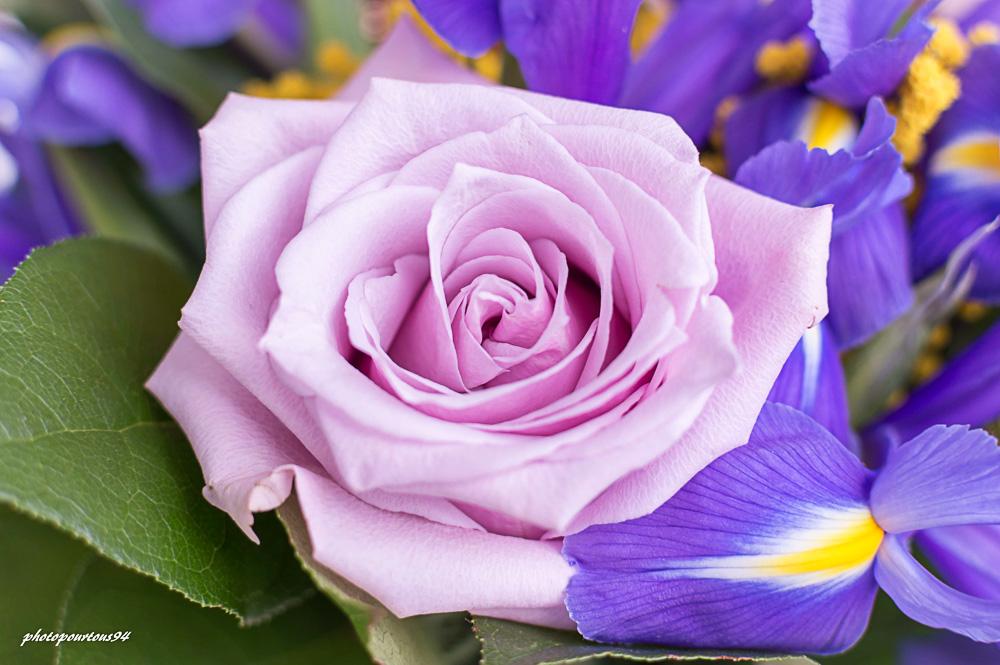 fleur (3).jpg