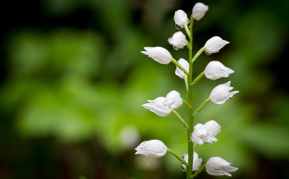 180514-orchidees_kolhute-30_1500.jpg