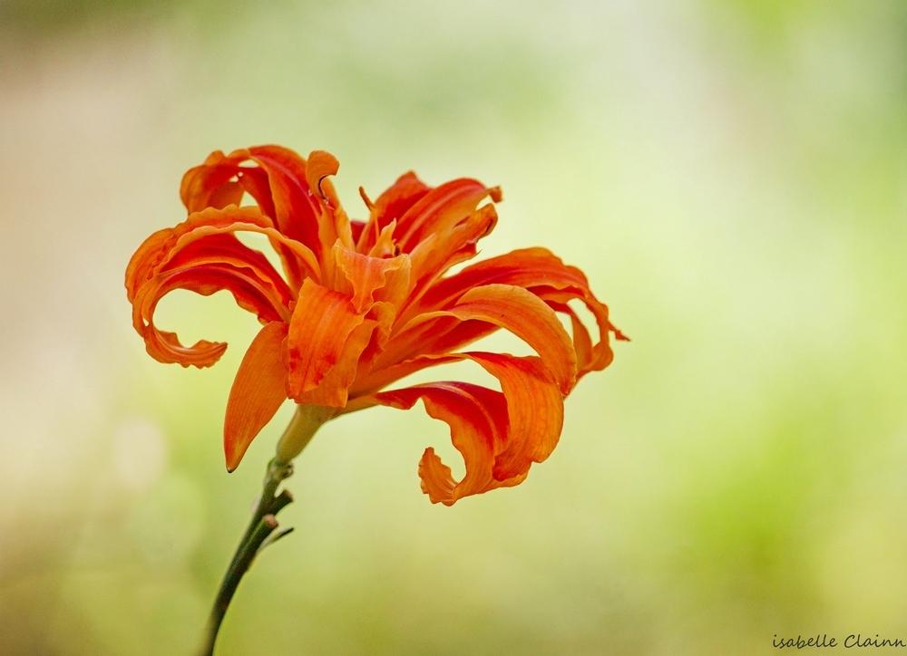 fleur 3fp.jpg