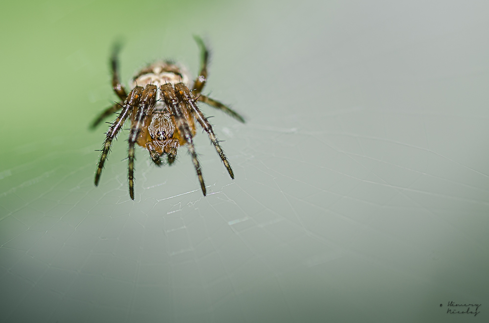 spider.jpg.50407bddf3909272278035532bbbffbd.jpg