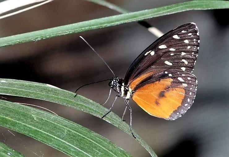 Papillons (4).jpg
