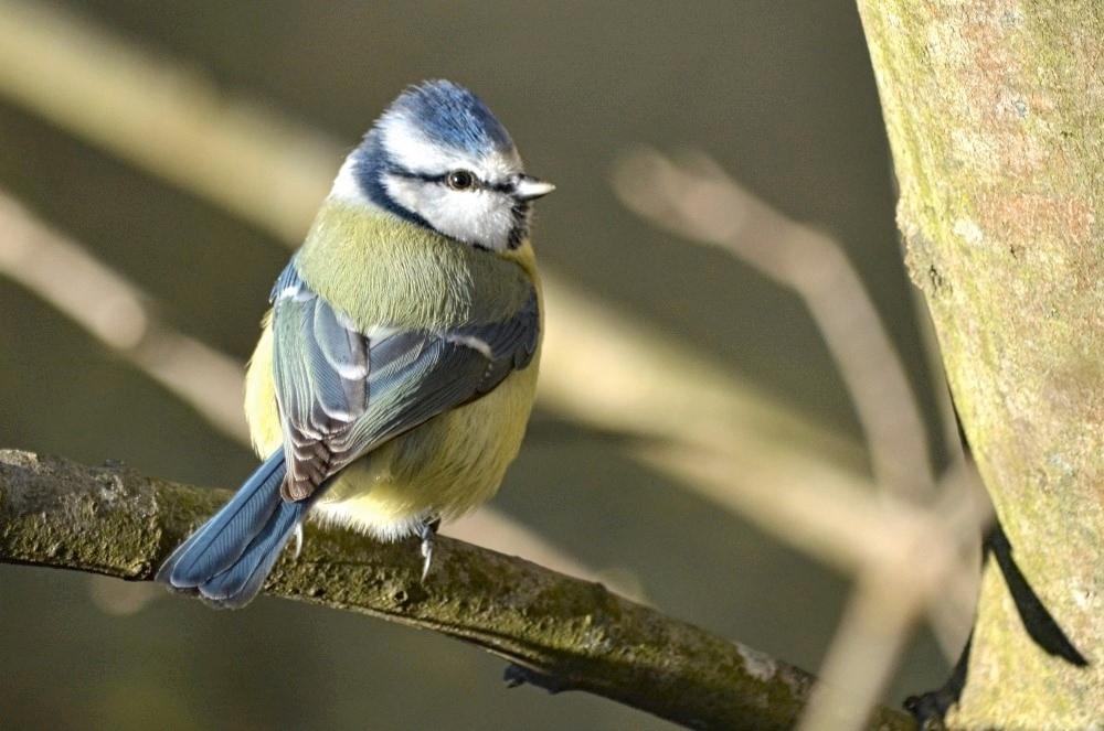 Oiseaux (2).jpg