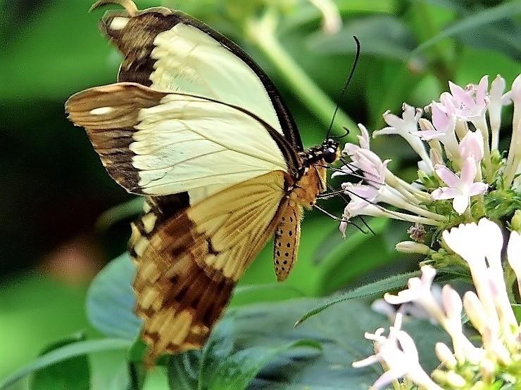 Papillons (3).jpg