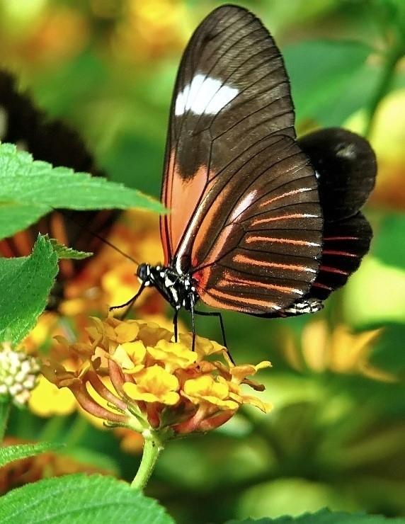 Papillons (5).jpg