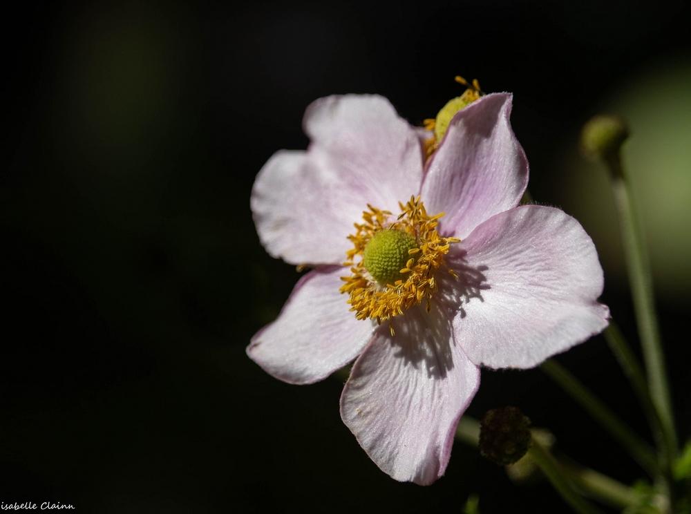 fleur A fp.jpg