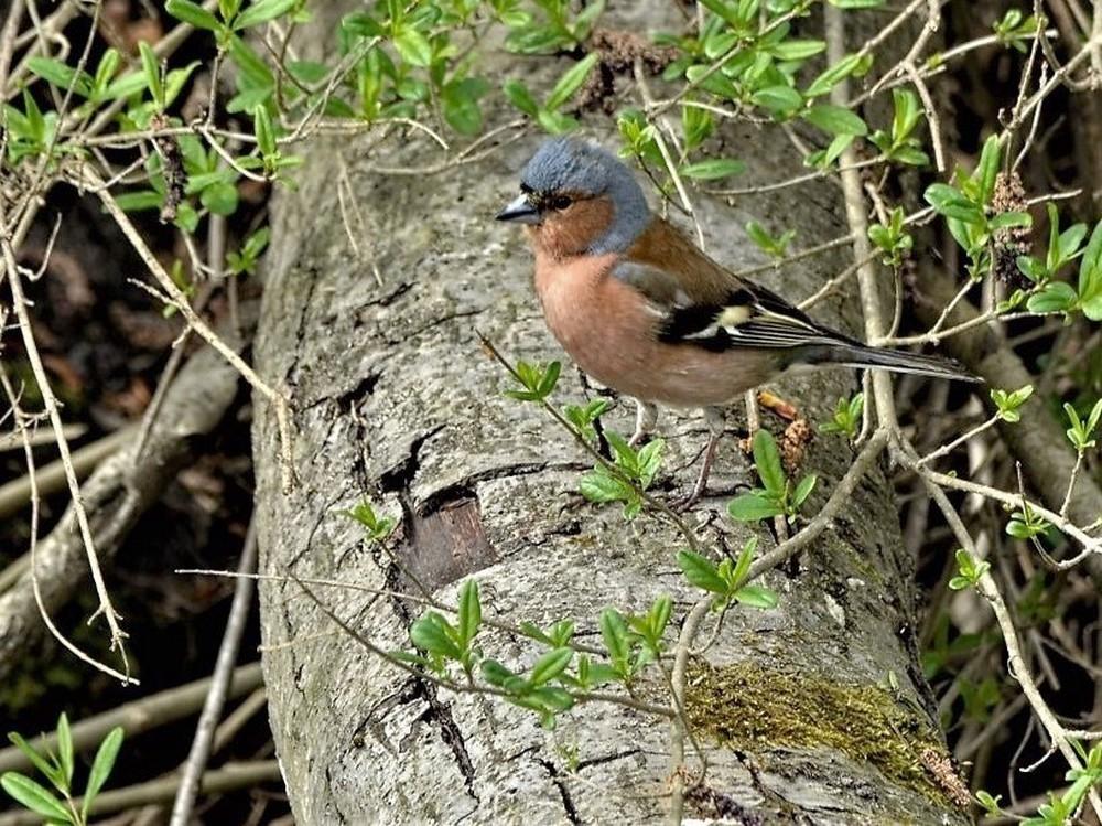 Oiseaux (1).jpg