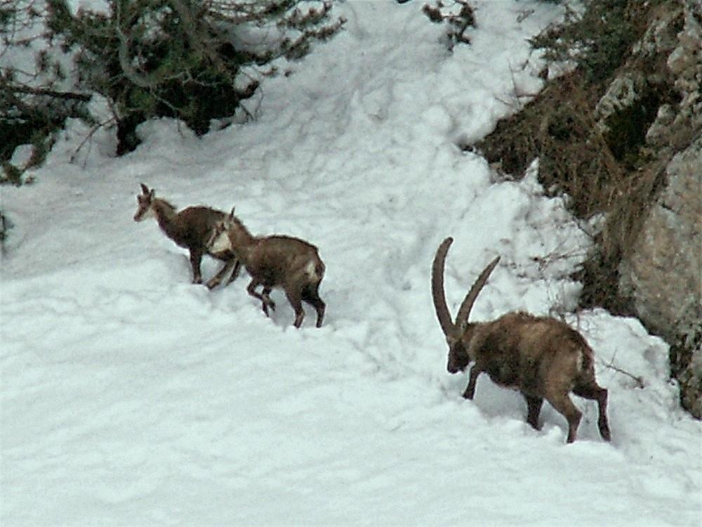 Dans la neige_ (8).jpg