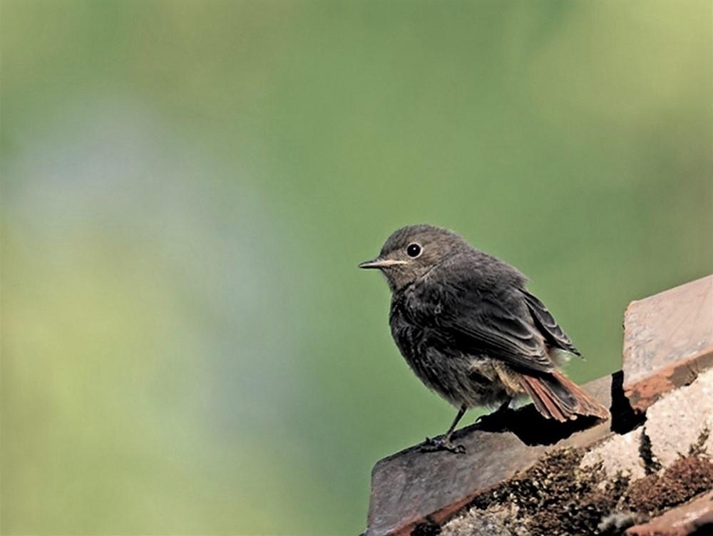 Oiseaux (4).jpg