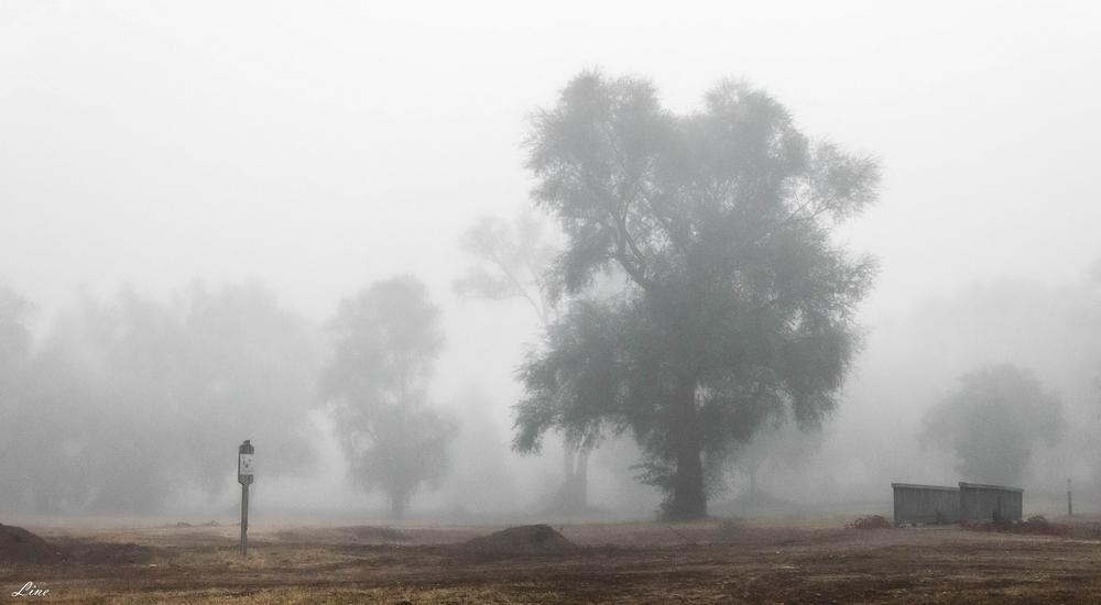 masque de brouillard 2.JPG