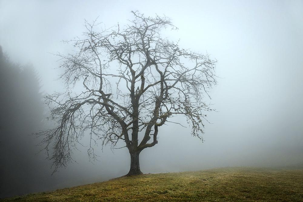 dans la brume III.jpg