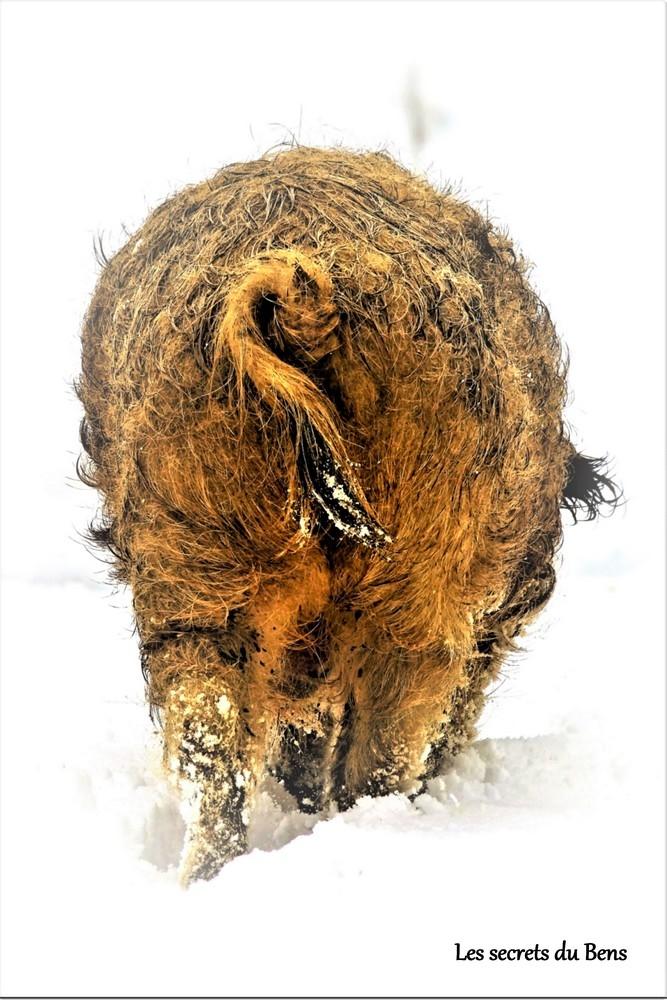 Photo de cul ! - Photo animalière - Forumdephotos.com