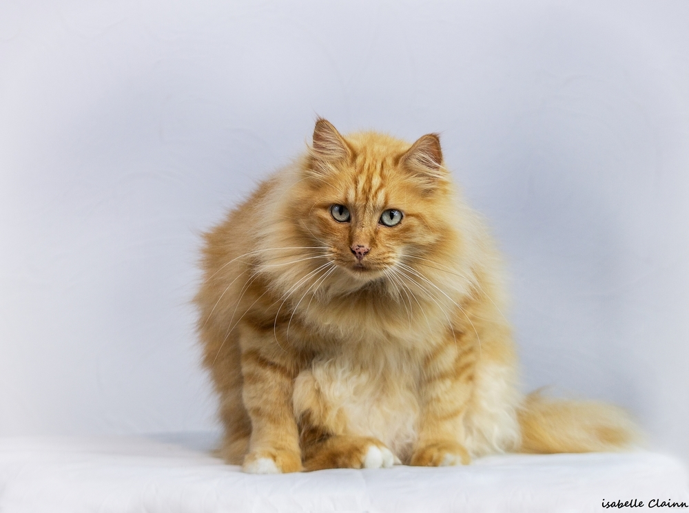 les chats 15fp.jpg