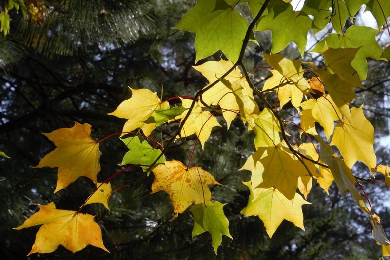 IMG_8286 Arboretum imgranne (Copier).jpg