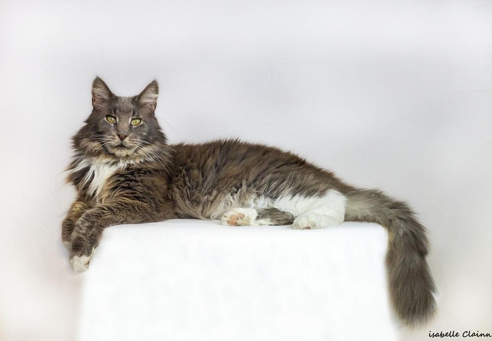 les chats 5fp.jpg