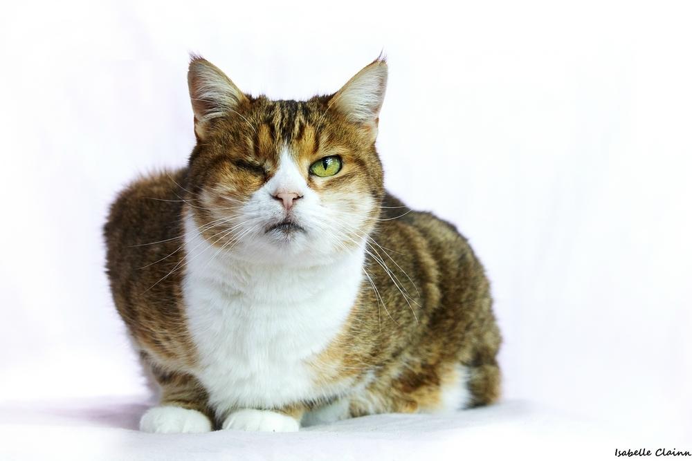 les chats 13fp.jpg