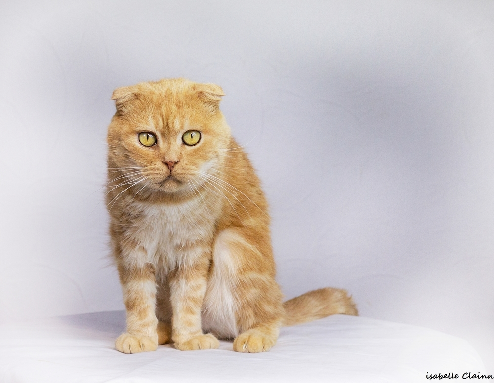 les chats 11fp.jpg